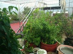 名圃花园  单身公寓  价格便宜  欢迎来电